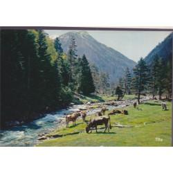 Vaches dans la vallée du...